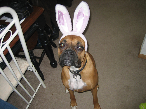 dogs with bunny ears