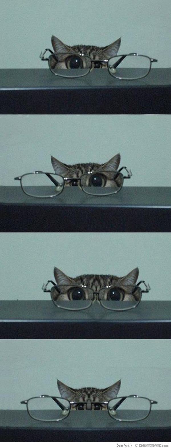 funny kitten picture