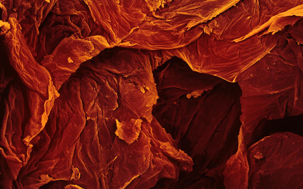 Food Under A Microscope