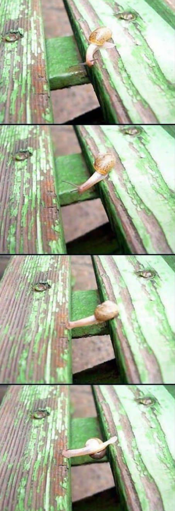 funny snail pictures