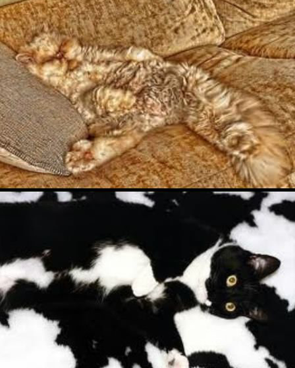 Cat Camouflage
