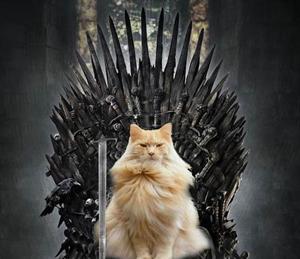 Cat Of Thrones Strange Beaver
