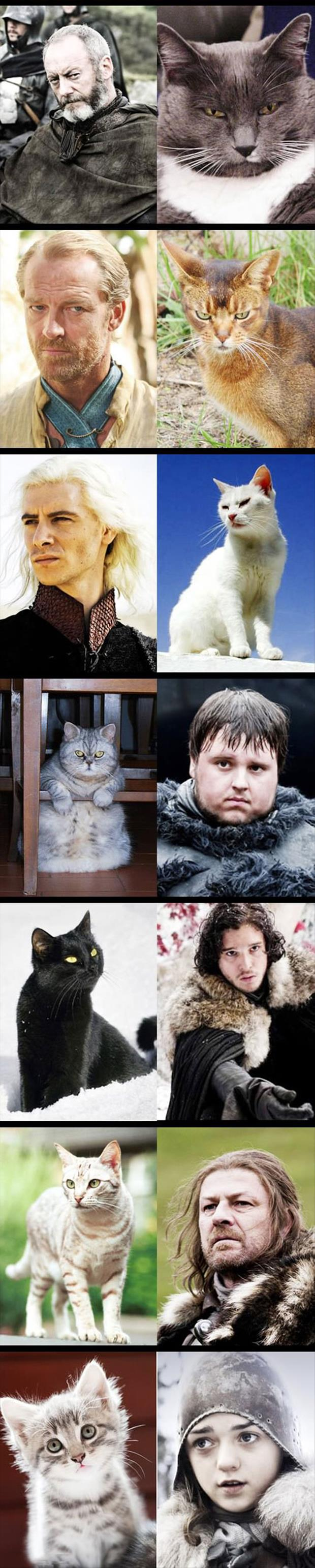 cats as game of thrones characters