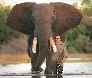 peter and the elephant