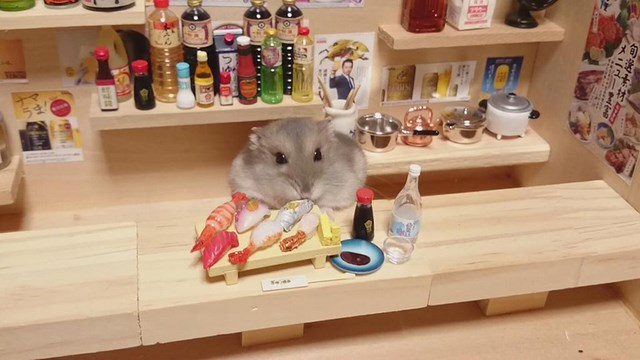 cute tiny hamster bartender
