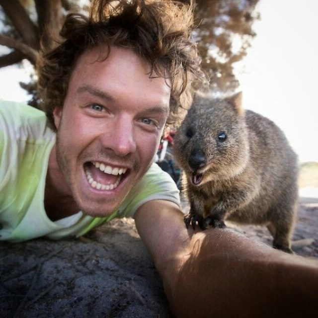 Selfies With Quokkas Is The New Hotness In Australia ...