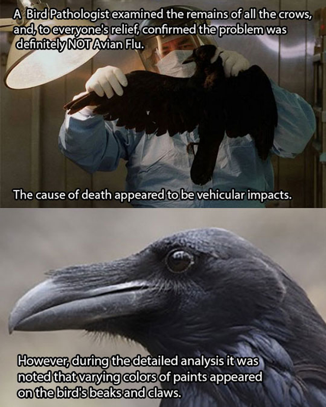 The Case Of The Murdered Crows Strange Beaver