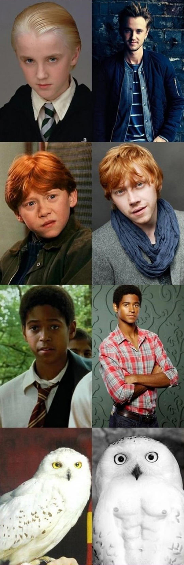 The Cast Of Harry Potter - Then And Now