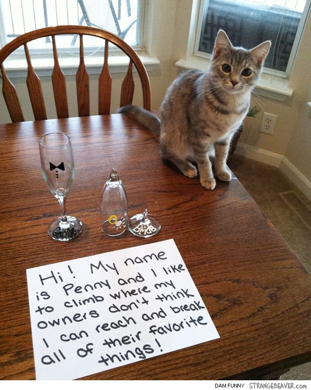 Funny pet shaming